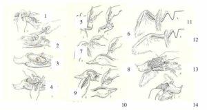 Основные приемы препарирования птиц