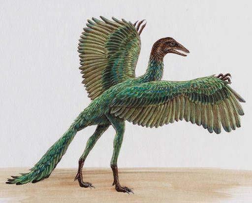 Археоптерикс – самая древняя птица