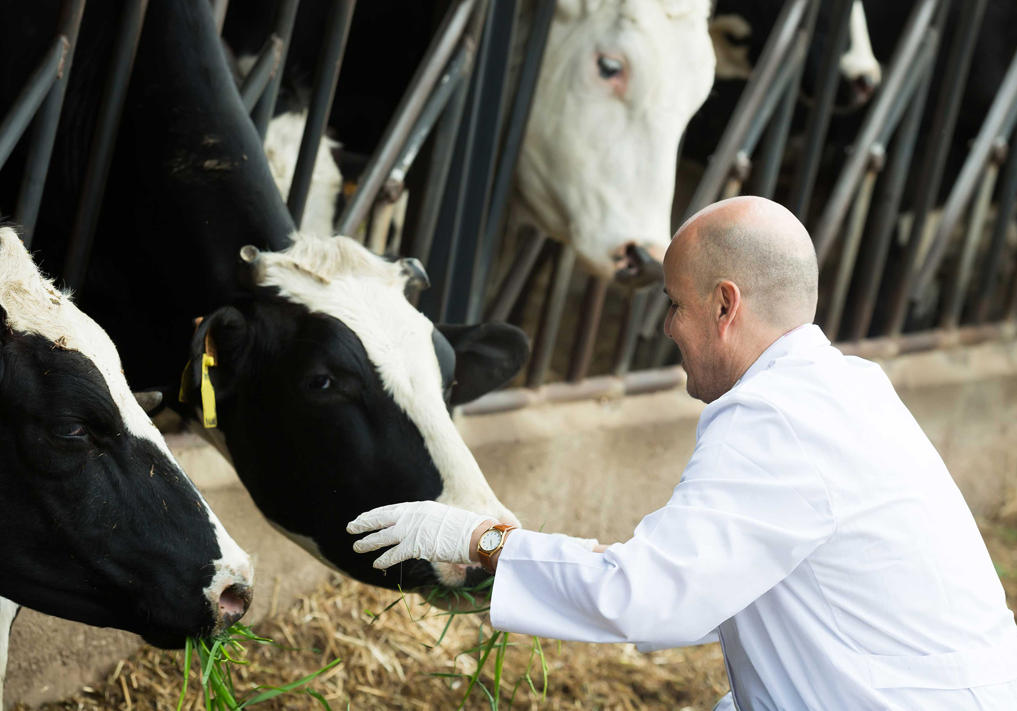 Биотехнология в животноводстве