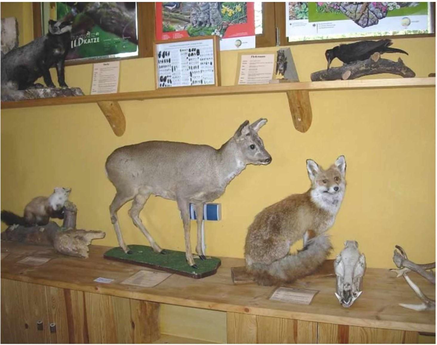Чучела животных и птиц в лесном музее