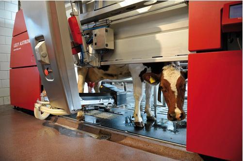 Доильный робот «Астронавт» фирмы «Lely»