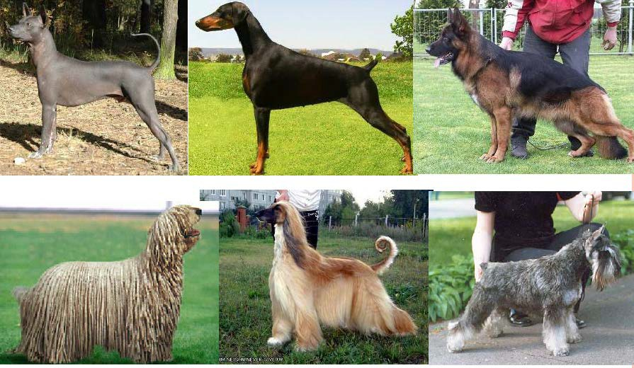 Изменение структуры и длины шерсти у собак