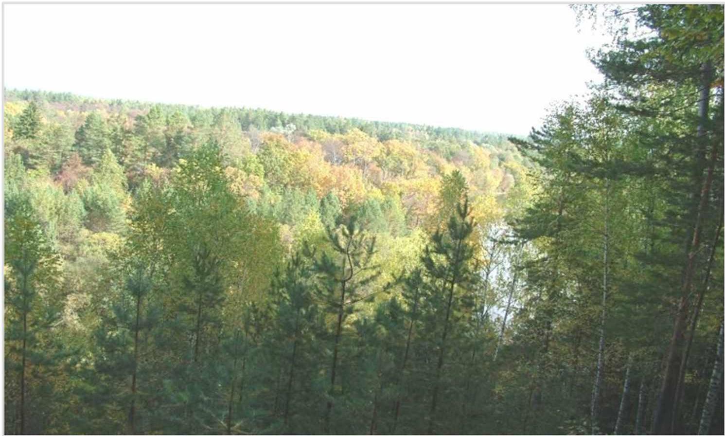 Лесные охотничьи угодья - смешанные хвойно-лиственные леса