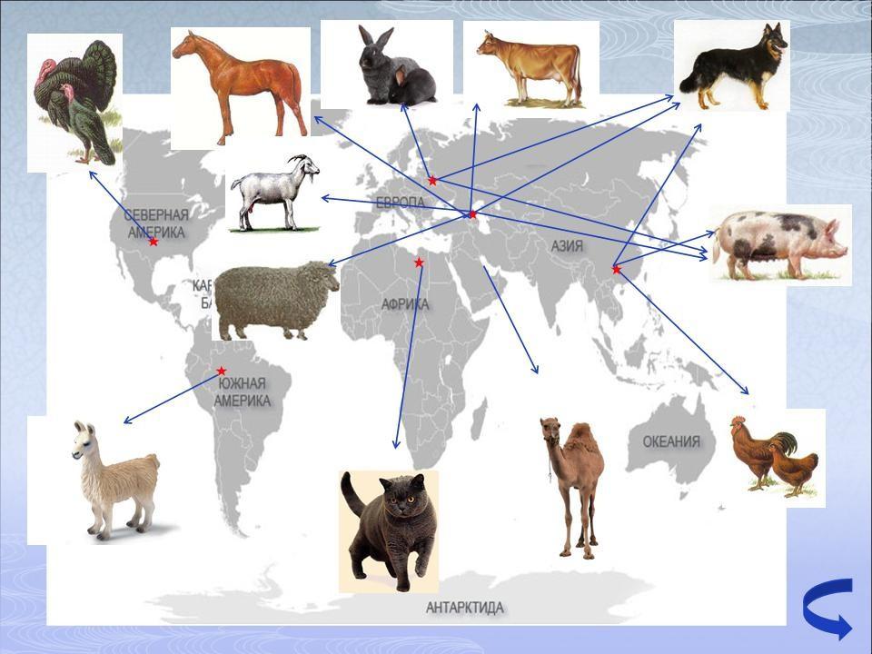 Места одомашнивания животных