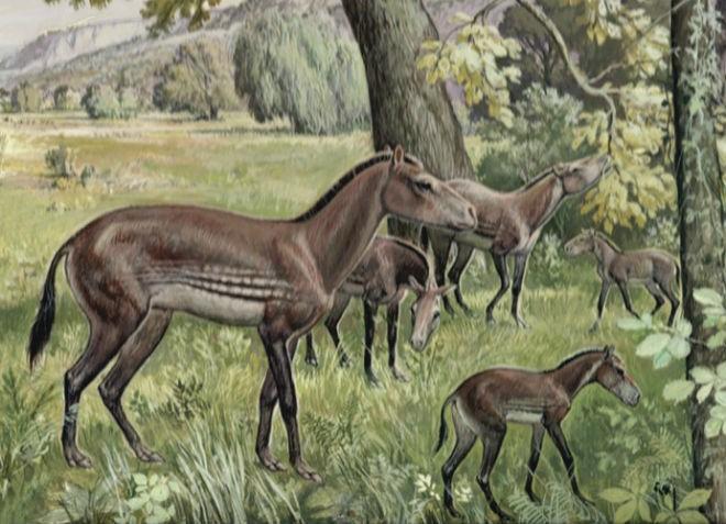 Один из предков современной лошади - Анхитерий