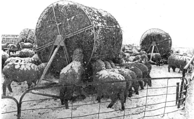 Передвижная ротационная самокормушка для овец