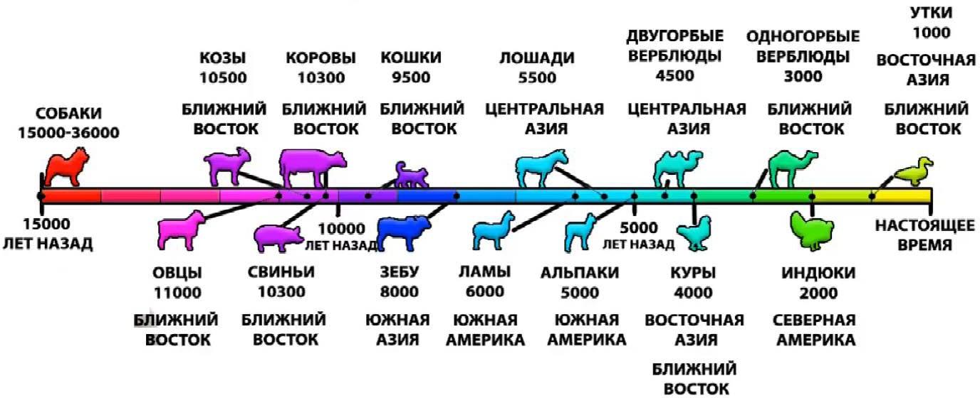 Периоды доместикации (по данным антропологии)