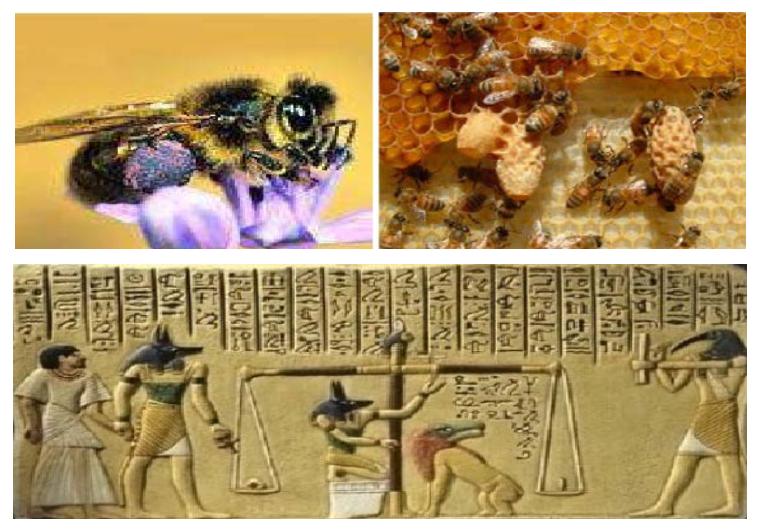 Рисунок пчел периода палеолита