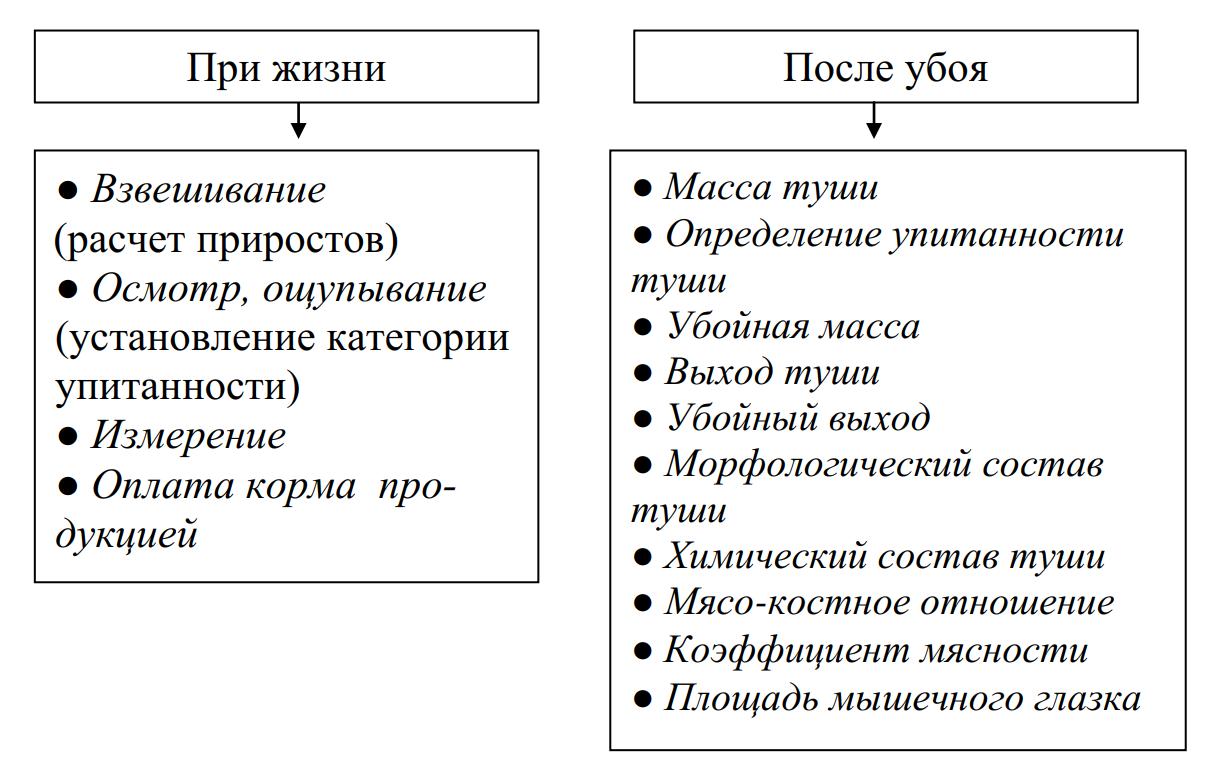 Схема оценки мясной продуктивности