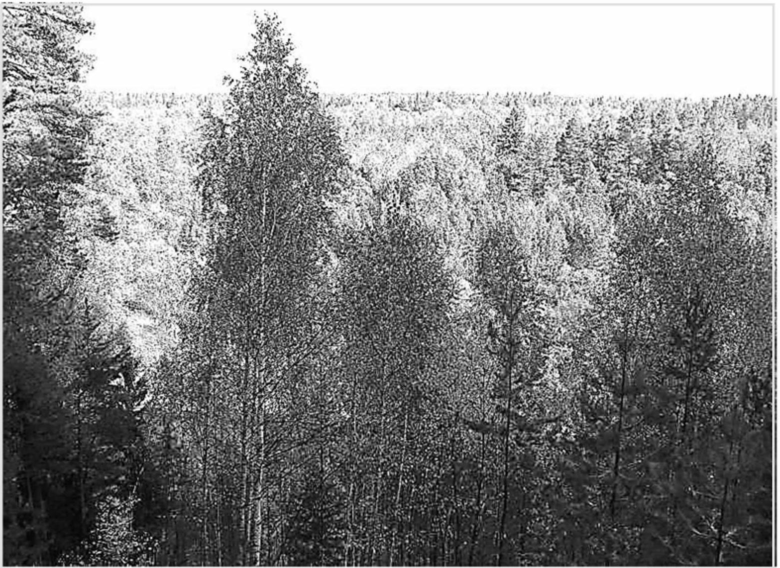 Типичный участок лесного охотничьего угодья