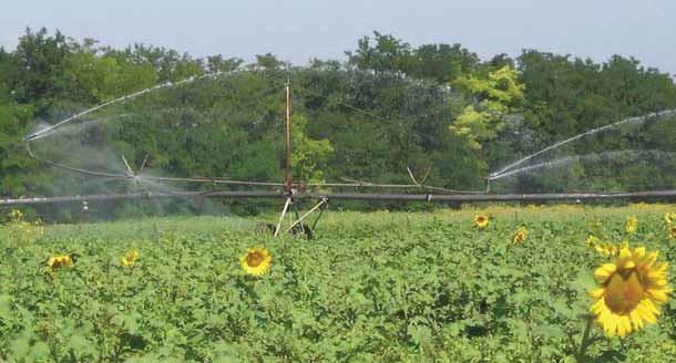 Вид дождевальной машины «Днепр» в процессе полива