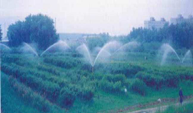вид полива комплектом синхронно-импульсного дождевания КСИД-1 (по ФГНУ ВНИИ «Радуга»)