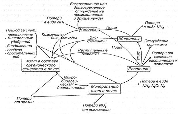 Цикл азота в биосфере при интенсивной обработке почвы