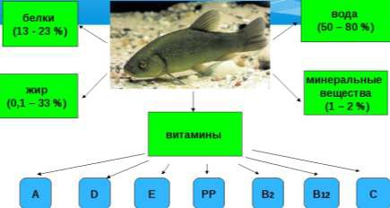 Химический состав мяса рыб