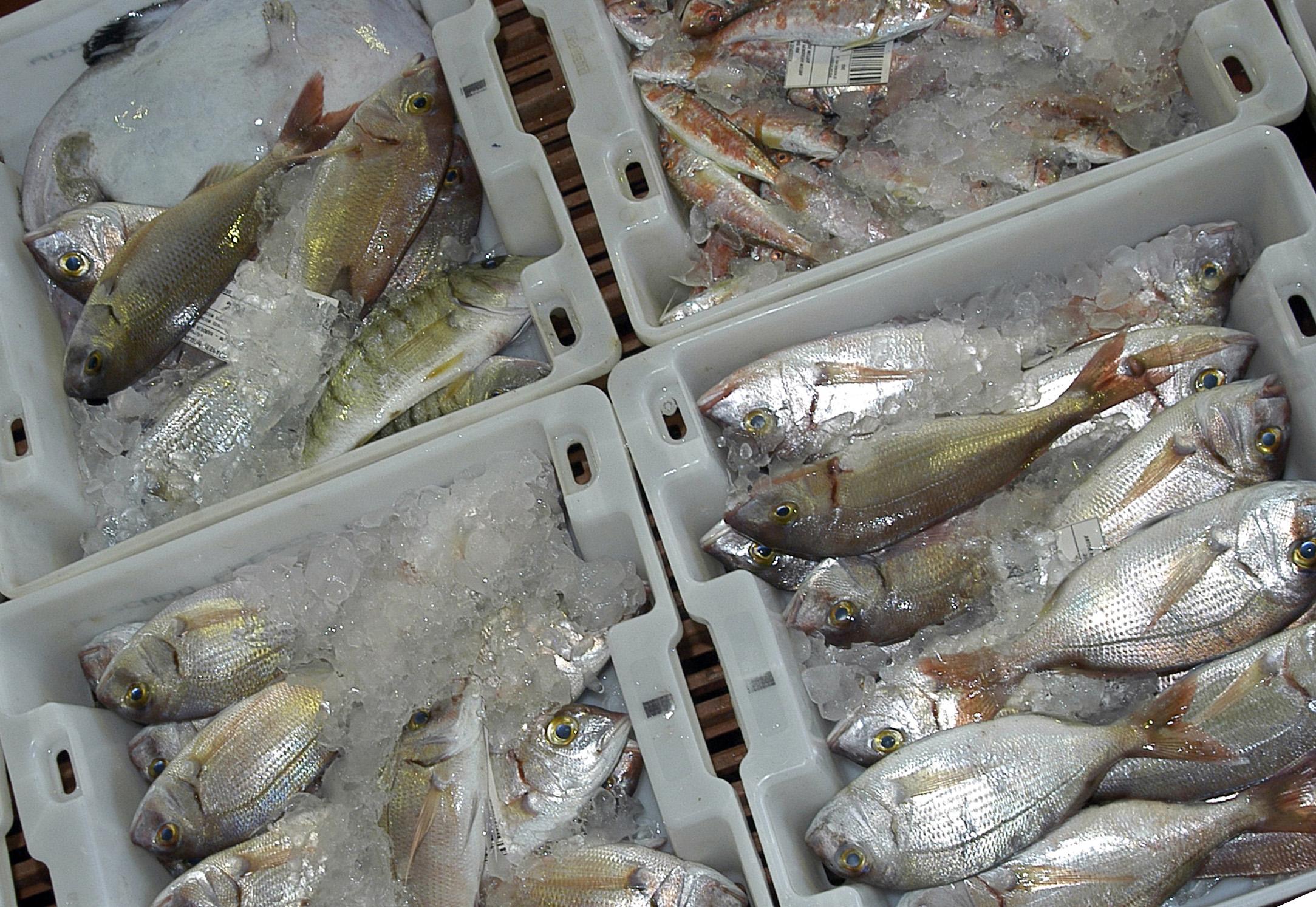 Консервирование, хранение, сушка и микрофлора рыбы и рыбной продукции