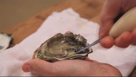 Надрезание мантии моллюска