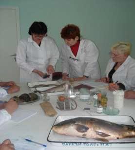 Проведение дегустационной комиссией органолептической оценки качества рыбы
