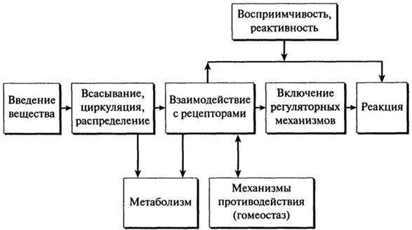 Путь и воздействие ксенобиотика в организм человека