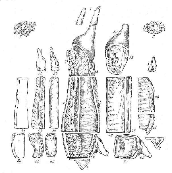 Схема использования свиных туш беконной и мясной упитанности со шкурой для производства консервов