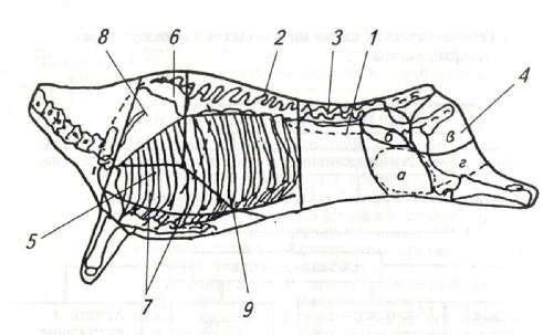 Схема разделки говядины на крупнокусковые полуфабрикаты