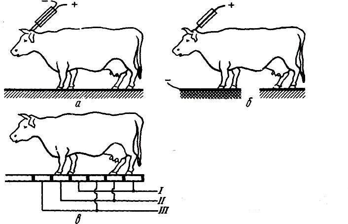 Способы электрооглушения крупного рогатого скота