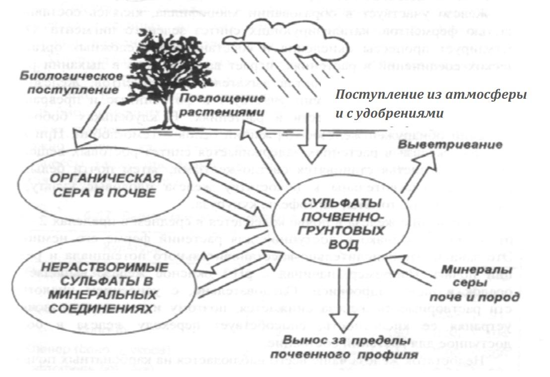 Трансформация и миграция серы в почве
