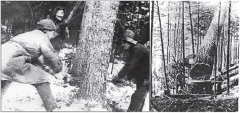 Двуручная пила и ее использование на валке деревьев