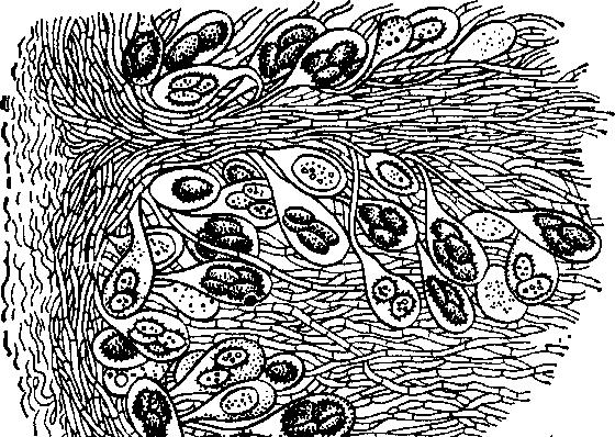 Расположение гриба под землей