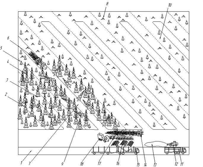 Схема разработки лесосеки ВТПМ