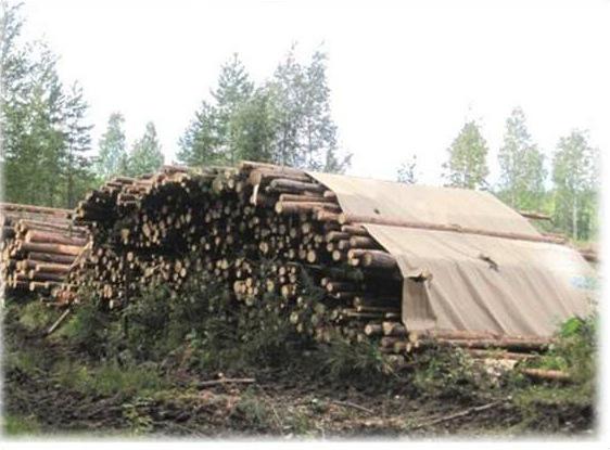 штабель топливной древесины
