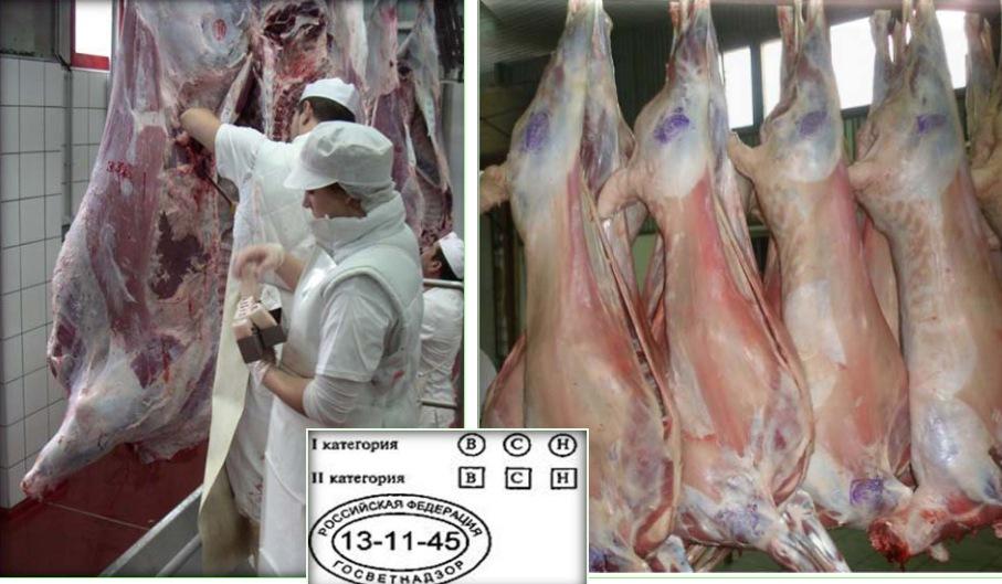Клеймение и товароведческая маркировка туш крупного рогатого скота