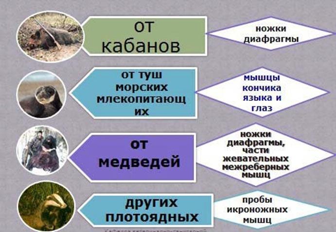 Предпочтительные места отбора проб у разных животных