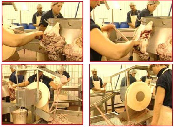 технологический процесс обработки кишечного сырья