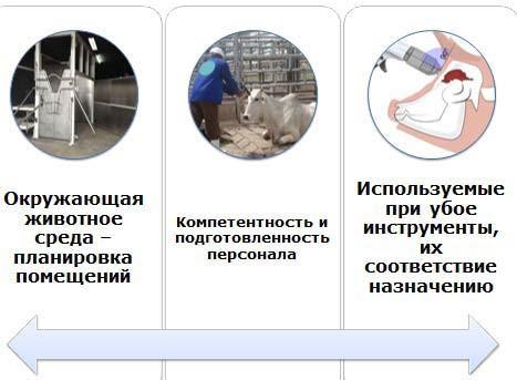 убой животных
