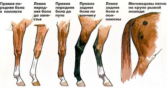 Белые отметины ног
