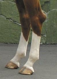 Бурсит пятки скакательного сустава (пипгак)