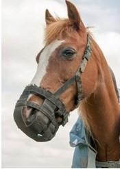 Недоуздок-намордник, против прикуски лошади