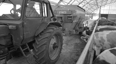 Процесс раздачи кормов животным