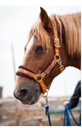 Широко раскрытые ноздри лошади, при эмфиземе легких