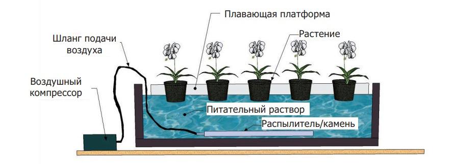 выращивание овощных растений на водной культуре