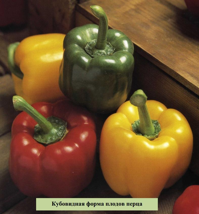 Кубовидная форма плодов перца