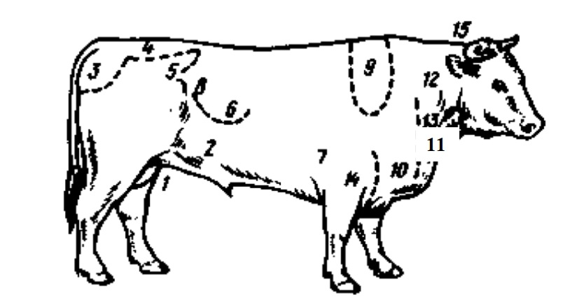 Последовательность жироотложения на туловище крупного рогатого скота