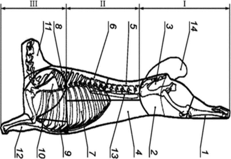 Схема разделки баранины на отруба