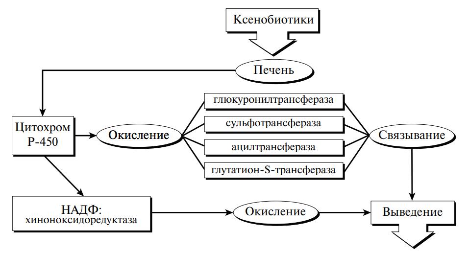 биотрансформация чужеродных веществ