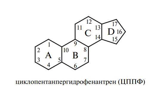 циклопентанпергидрофенантрен