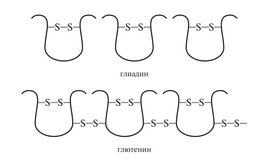 Дисульфидные связи в глиадине и глютенине