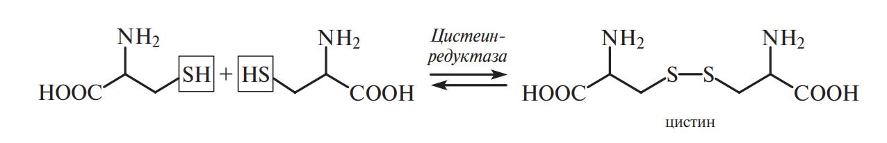 ферментативная окислительно-восстановительная реакция