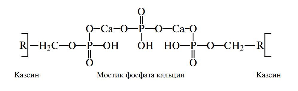 Фосфаткальциевые мостики