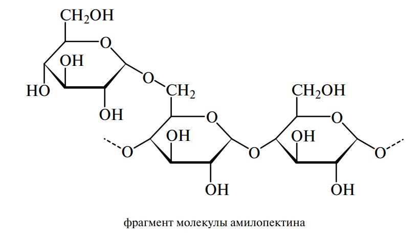 фрагмент молекулы амилопектина