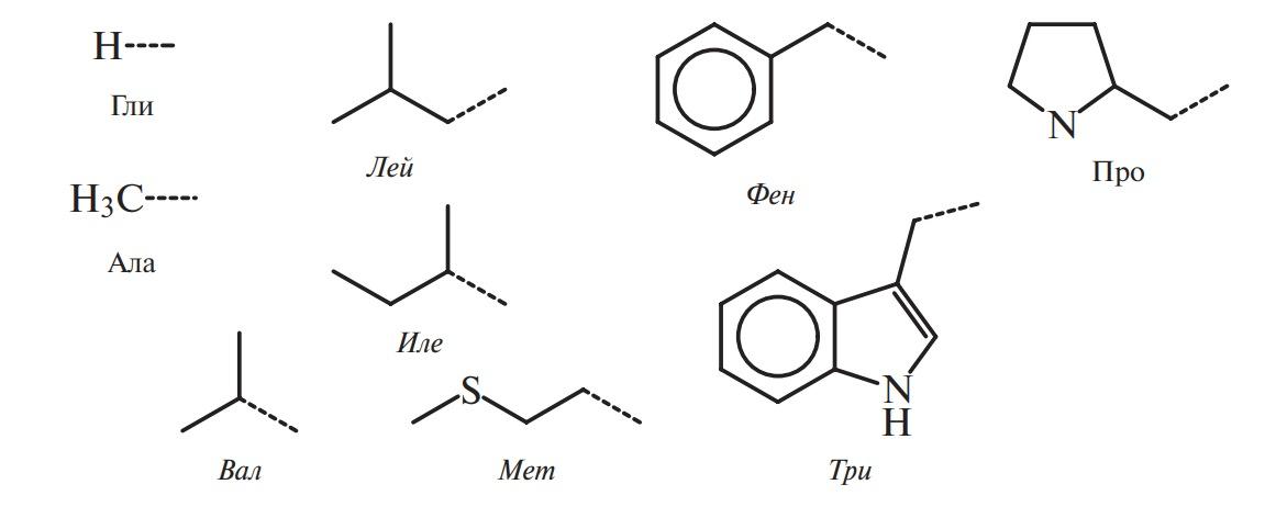 Гидрофобные аминокислоты